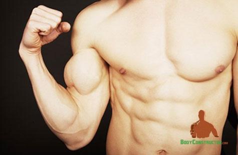 мускули, синтез, протеин, мускулна маса